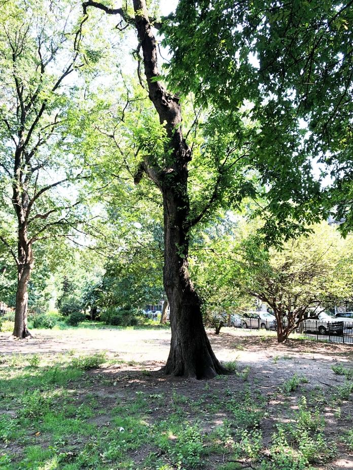 tompkins 5 tree ii